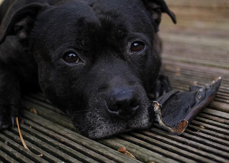kauwsnacks voor een gezond hondengebit