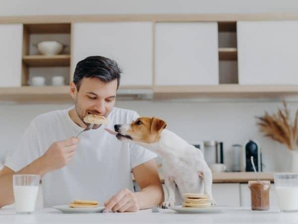 hond pannenkoek eten