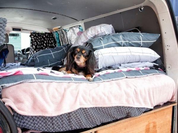 Hond in camper op bed