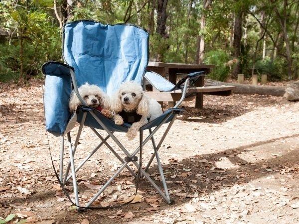 Honden op kampeerstoel