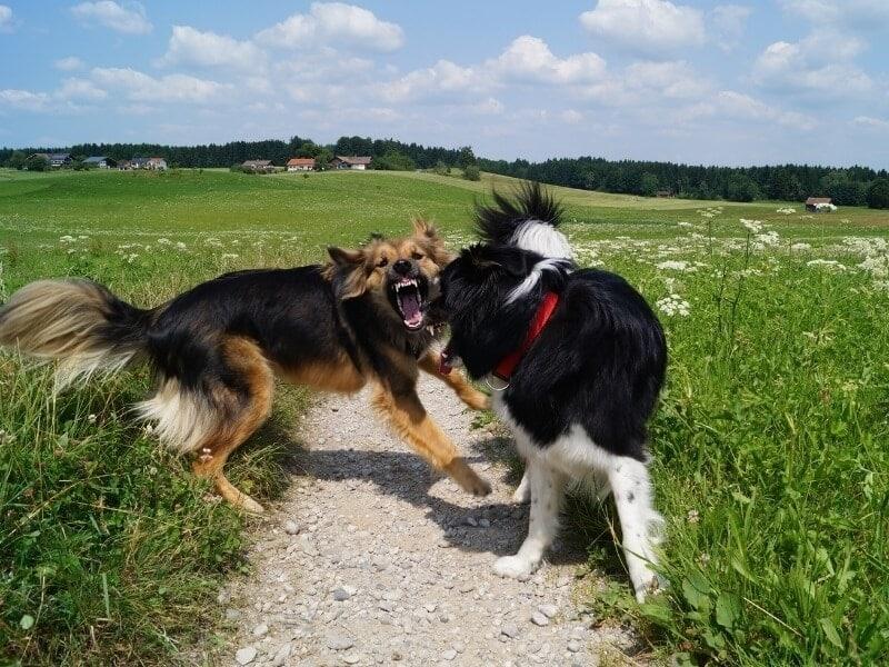 2 honden niet leuk tegen elkaar