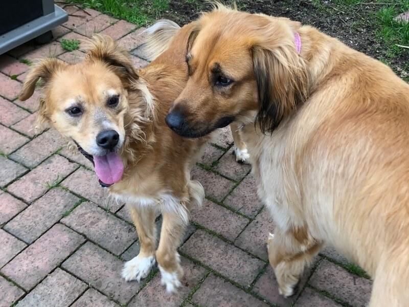 2 honden kennismaken herplaatser