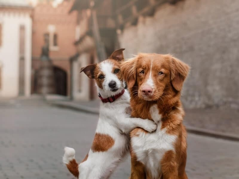 twee honden samen