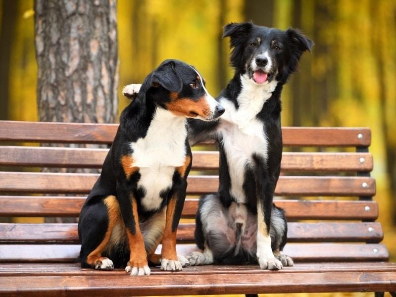 twee honden op een bankje